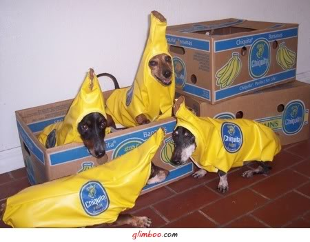 Ils sont parmis vous !  Chien-banane-228b495